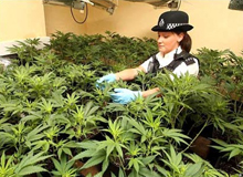 letting agent hertford cannabis farm
